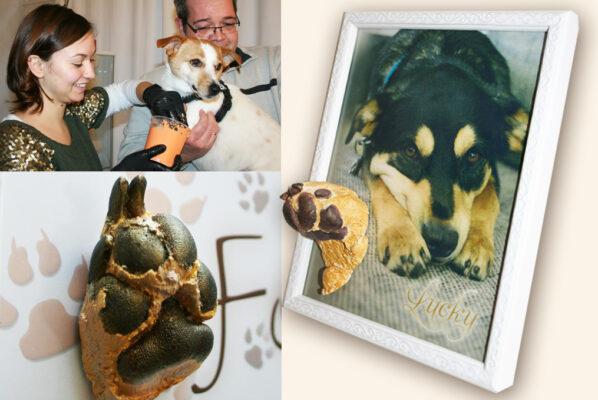 Gipsabdruck Set für Hundepfoten