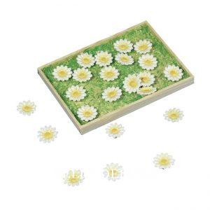 Mini Gänseblümchen